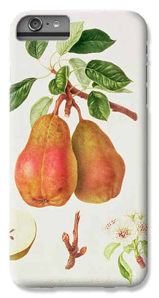 The Chaumontelle Pear IPhone 6 Plus Case by William Hooker