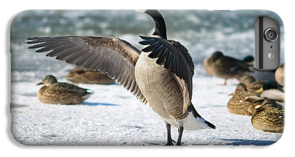 Geese iPhone 6 Plus Case - The Conductor by Rob Blair