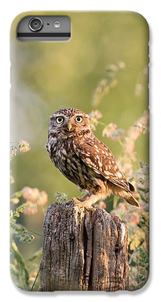 Owl iPhone 6 Plus Case - The Little Owl by Roeselien Raimond
