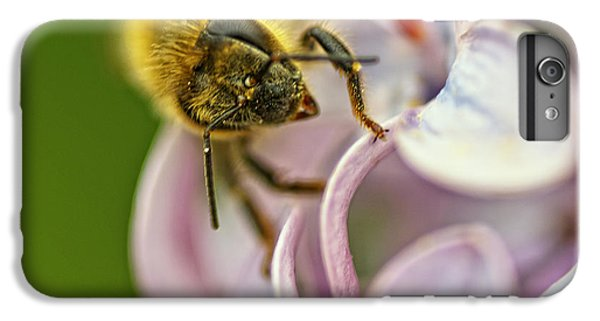 Honeybee iPhone 6 Plus Case - The Pollinator by Susan Capuano