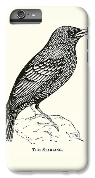 The Starling IPhone 6 Plus Case by English School