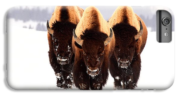 Three Amigos IPhone 6 Plus Case by Steve Hinch