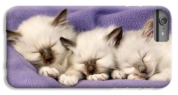Birman iPhone 6 Plus Case - Three Kittens Sleeping by MGL Meiklejohn Graphics Licensing