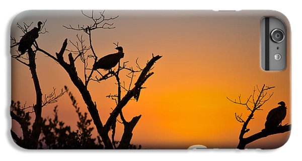 Vulture iPhone 6 Plus Case - Three Vultures Waiting by Delphimages Photo Creations