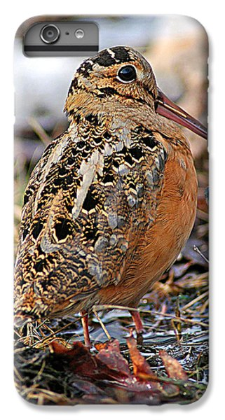 Timberdoodle The American Woodcock IPhone 6 Plus Case