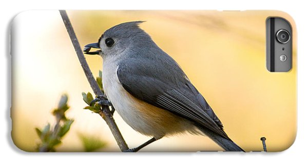 Titmouse iPhone 6 Plus Case - Titmouse In Gold by Shane Holsclaw
