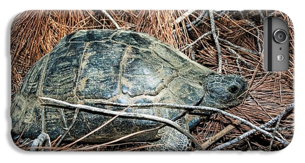Tortoise iPhone 6 Plus Case - Tortoise In A Forest by Photostock-israel