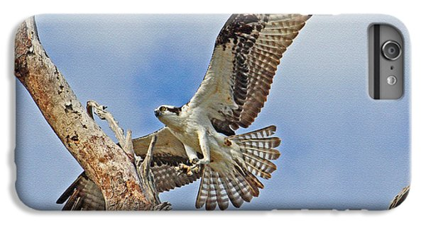 Touch Down - Osprey In Flight IPhone 6 Plus Case