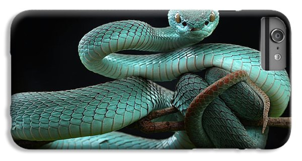 Trimeresurus Insularis [blue] IPhone 6 Plus Case