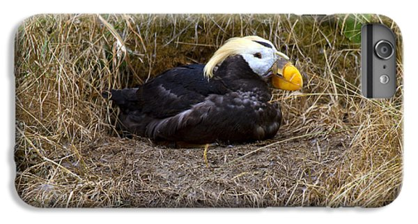 Puffin iPhone 6 Plus Case - Tufted Puffin by Mike  Dawson