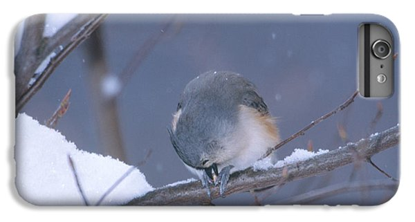 Tufted Titmouse Eating Seeds IPhone 6 Plus Case by Paul J. Fusco