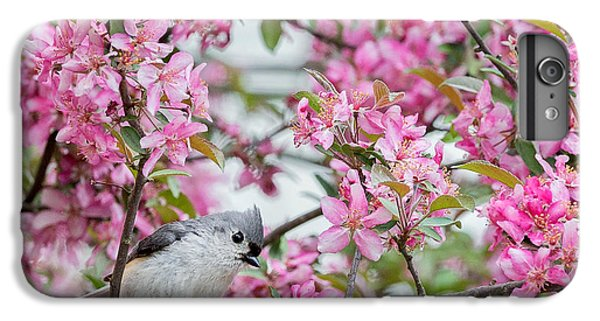 Tufted Titmouse In A Pear Tree Square IPhone 6 Plus Case by Bill Wakeley