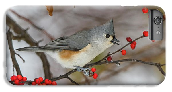 Titmouse iPhone 6 Plus Case - Tufted Titmouse (parus Bicolor by Richard and Susan Day