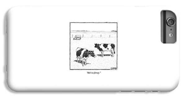 Two Averagely Spotted Cows Looking At A Plain Cow IPhone 6 Plus Case