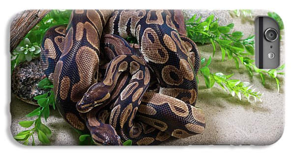Two Burmese Pythons Python Bivittatus IPhone 6 Plus Case
