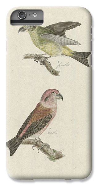 Crossbill iPhone 6 Plus Case - Two Crossbills, Possibly Christiaan Sepp by Quint Lox