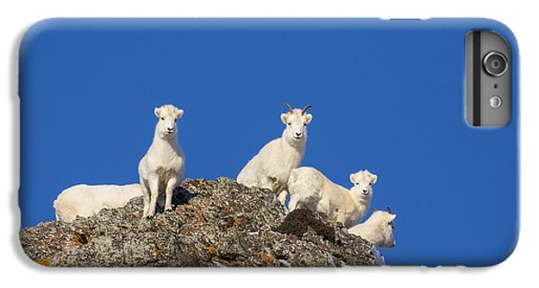 Sheep iPhone 6 Plus Case - Under The Blues Skies Of Winter by Tim Grams