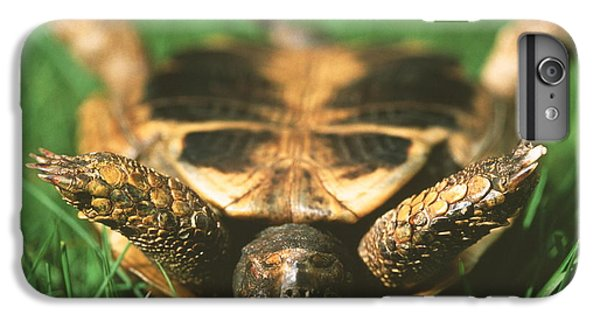 Tortoise iPhone 6 Plus Case - Upside Down Tortoise by Gustoimages/science Photo Library