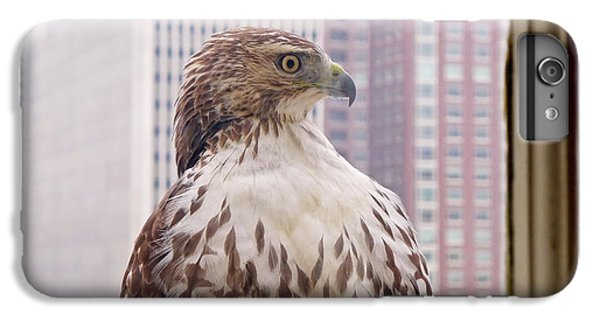 Urban Red-tailed Hawk IPhone 6 Plus Case by Rona Black