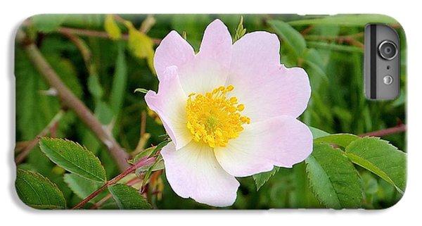 Vert Jaune Rose IPhone 6 Plus Case