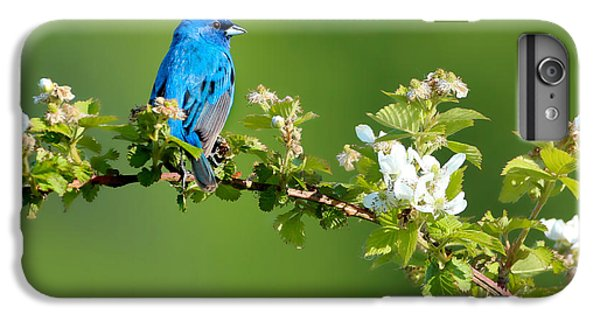 Bunting iPhone 6 Plus Case - Vibrance Of Spring by Rob Blair