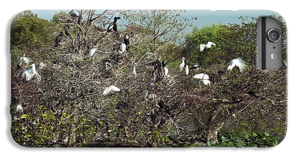 Wading Birds Roosting In A Tree IPhone 6 Plus Case by Bob Gibbons