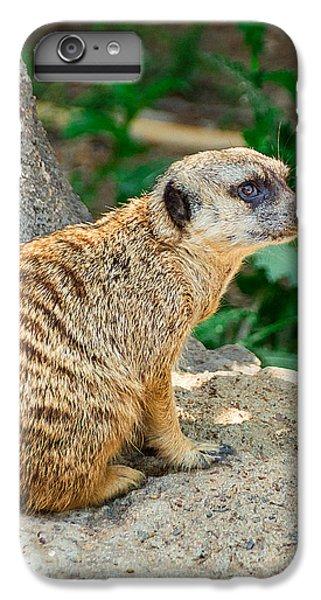 Meerkat iPhone 6 Plus Case - Watchful Meerkat Vertical by Jon Woodhams