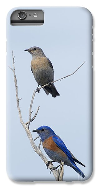 Western Bluebird Pair IPhone 6 Plus Case by Mike  Dawson