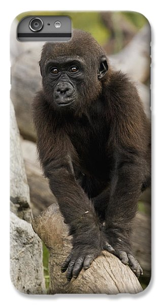 Western Lowland Gorilla Baby IPhone 6 Plus Case by San Diego Zoo