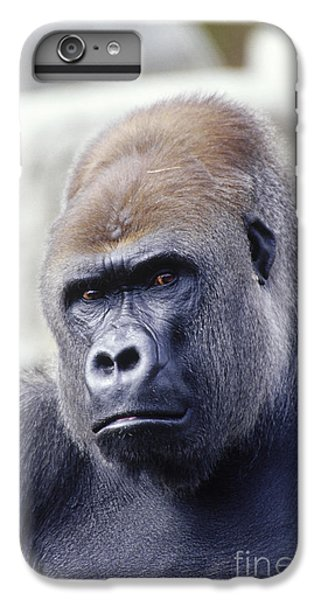 Western Lowland Gorilla IPhone 6 Plus Case by Gregory G. Dimijian