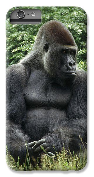 Western Lowland Gorilla Male IPhone 6 Plus Case by Konrad Wothe