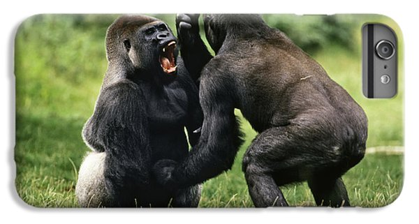 Western Lowland Gorilla Males Fighting IPhone 6 Plus Case by Konrad Wothe