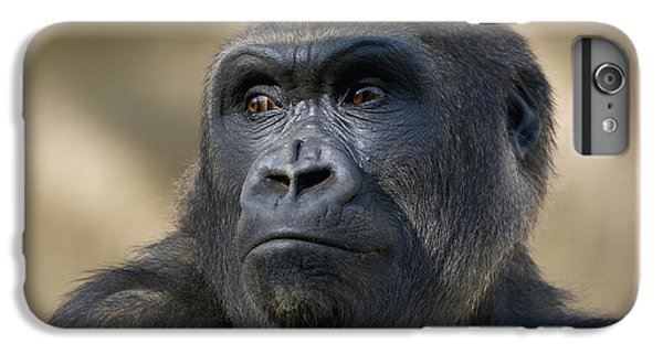 Western Lowland Gorilla Portrait IPhone 6 Plus Case by San Diego Zoo
