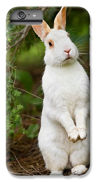 What's Up Doc IPhone 6 Plus Case by Bill Wakeley