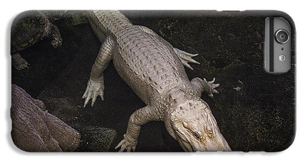 White Alligator IPhone 6 Plus Case