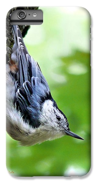 White Breasted Nuthatch IPhone 6 Plus Case by Christina Rollo