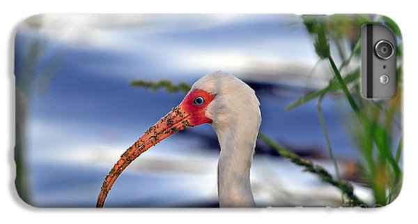 Intriguing Ibis IPhone 6 Plus Case by Al Powell Photography USA