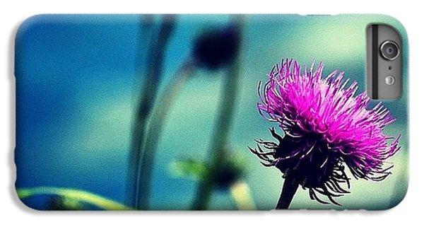 Bestoftheday iPhone 6 Plus Case - Wild Flower by Luisa Azzolini