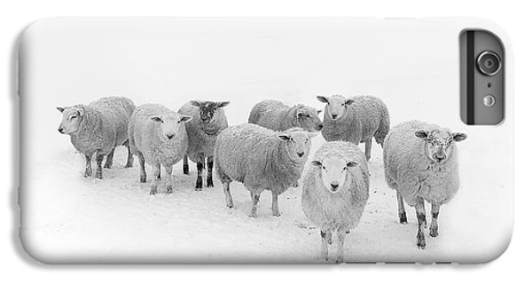 Sheep iPhone 6 Plus Case - Winter Woollies by Janet Burdon