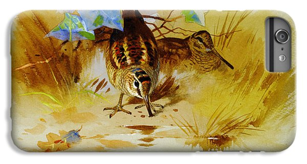 Woodcock In A Sandy Hollow IPhone 6 Plus Case by Celestial Images