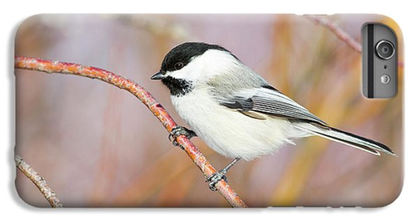 Wyoming, Sublette County, Black-capped IPhone 6 Plus Case by Elizabeth Boehm