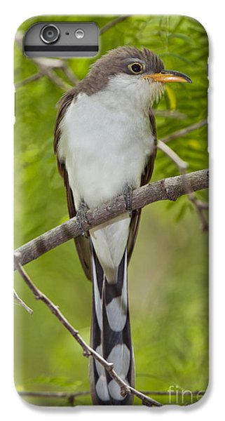 Yellow-billed Cuckoo IPhone 6 Plus Case by Anthony Mercieca