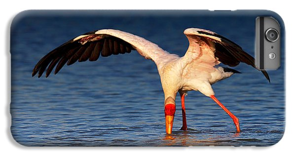 Ibis iPhone 6 Plus Case - Yellow-billed Stork Hunting For Food by Johan Swanepoel