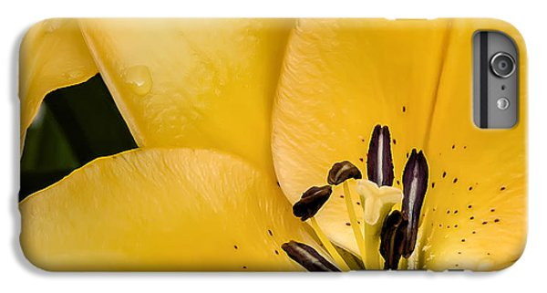 Lily iPhone 6 Plus Case - Yellow Lily by Scott Norris