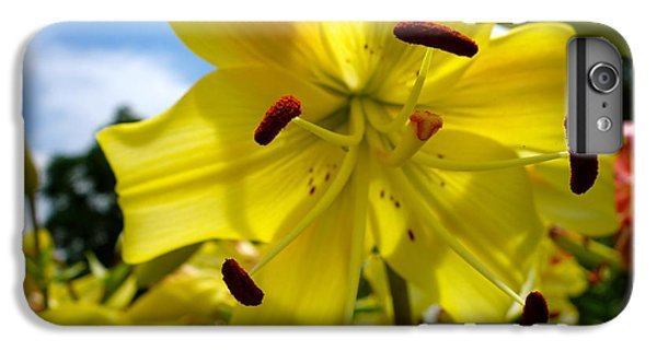 Yellow Whopper Lily 2 IPhone 6 Plus Case by Jacqueline Athmann