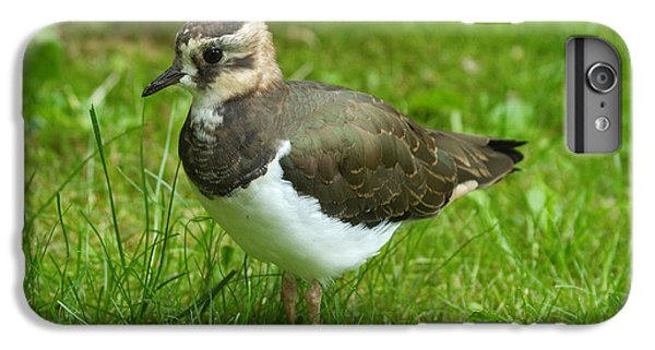 Lapwing iPhone 6 Plus Case - Young Lapwing by Helmut Pieper