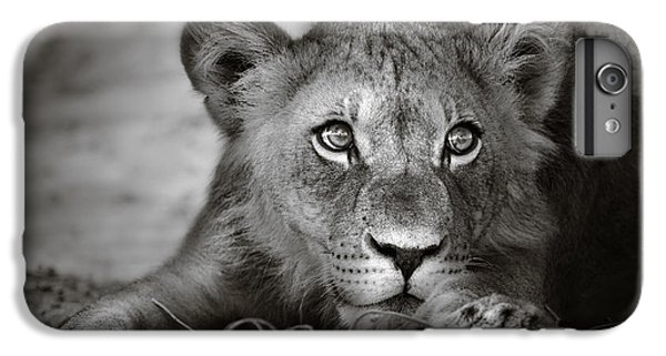 Lion Head iPhone 6 Plus Case - Young Lion Portrait by Johan Swanepoel