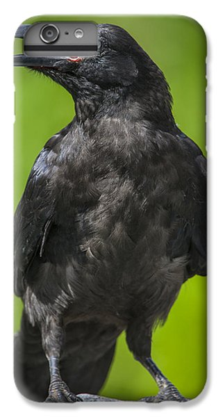 Young Raven IPhone 6 Plus Case by Tim Grams