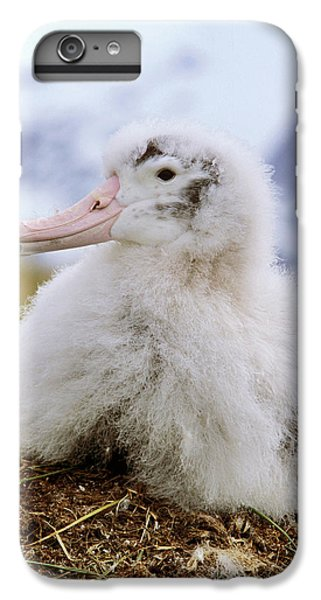 Young Wandering Albatross (diomendea IPhone 6 Plus Case by Martin Zwick