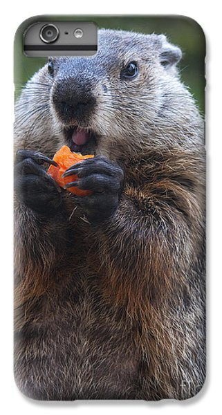 Yum-yum IPhone 6 Plus Case by Paul W Faust -  Impressions of Light